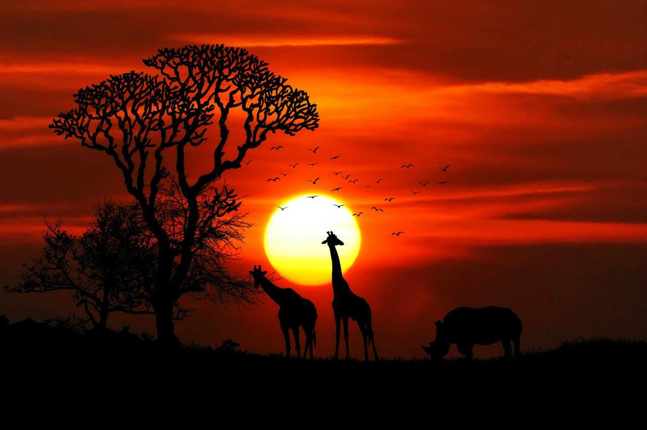 Safari, Kenija, slika: https://www.pexels.com