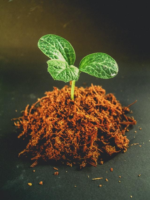 Struktura zemljišta i adekvatno uzgajanje azaleja